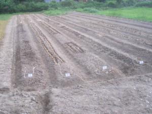 種蒔き、植付け完成