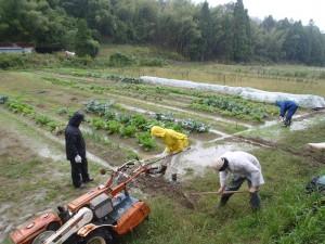 畑は水浸し状態。
